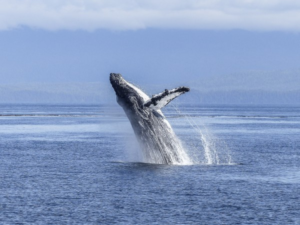 A Single Baby Boomer has a Whale of a Time in Victoria,BC